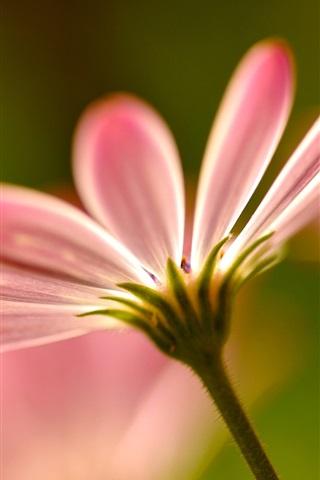 iPhone Wallpaper Pink flower petals macro photography