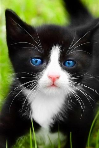 iPhone Wallpaper Black cat, blue eyes