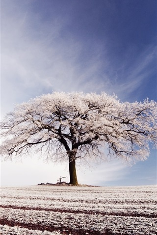 iPhone Wallpaper Broad field, lonely tree, blue sky, white clouds, frost