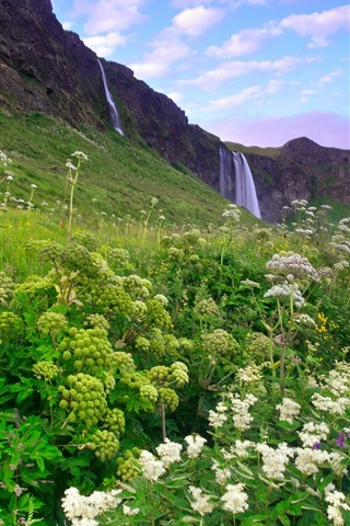 iPhone Wallpaper Iceland morning scenery, mountains, grass and flowers, waterfalls, lilac sky, clouds