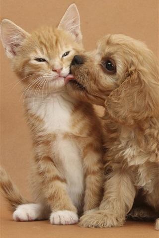 iPhone Wallpaper Kitten with puppy's friendship