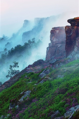 iPhone Wallpaper Early morning mountain landscape, forest, fog, flowers, grass, stones