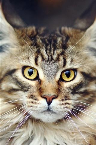 iPhone Wallpaper HD close-up of cat's face