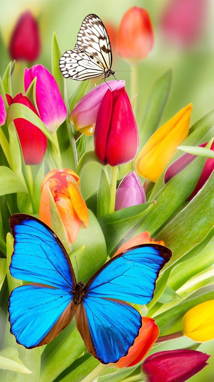 Анимационные открытки, открытка с тюльпанами и бабочками