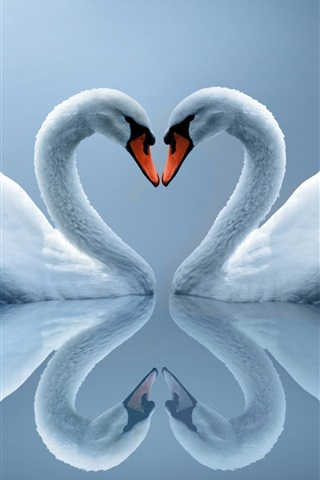iPhone Wallpaper White Swan couple, love heart-shaped, reflection