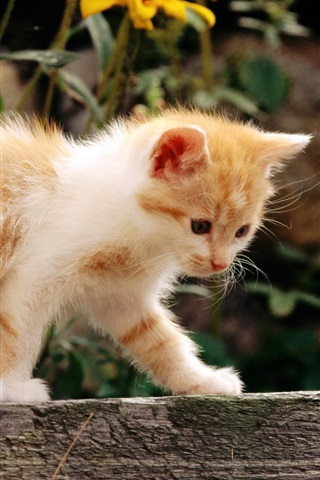 iPhone Wallpaper Cute kitten walking