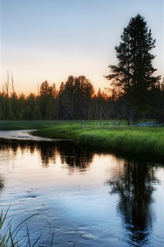 iPhone Wallpaper Nature forest, grass, river, dawn
