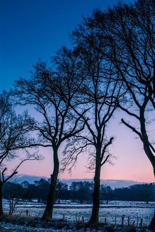 iPhone Wallpaper Norway winter scenery, trees, fields, frost, morning dawn