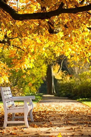 iPhone Wallpaper Autumn park, bench, yellow leaves