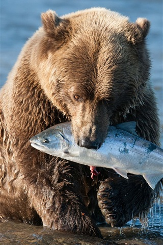 iPhone Wallpaper Brown bear catching a fish