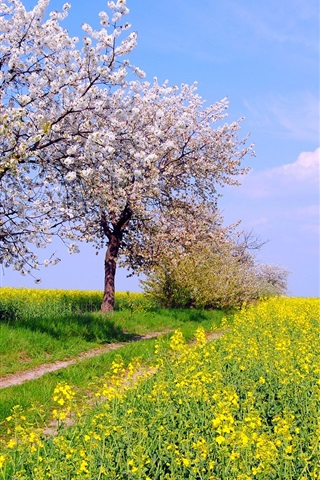 iPhone Wallpaper Germany spring nature scenery, fields, flowers, blue sky