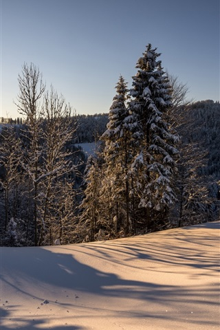 iPhone Wallpaper Switzerland, Hulftegg, nature winter landscape, morning, sun, forest, snow