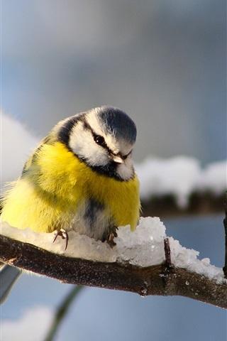 iPhone Wallpaper Bird photography, titmouse, twigs, winter snow