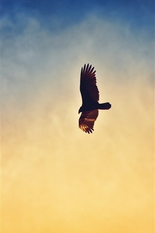 iPhone Wallpaper Eagle flying in the sunset sky