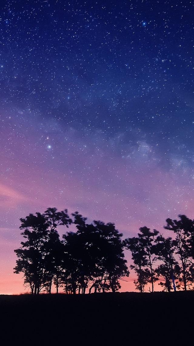 壁紙 紫色の夜空 星 木 シルエット 19x10 Hd 無料のデスクトップの背景 画像