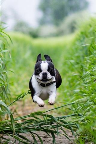 iPhone Wallpaper Dog running fast