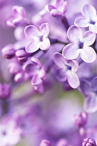 iPhone Wallpaper Lilac bloom, purple blurry background