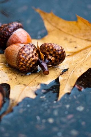 iPhone Wallpaper Autumn, leaf, acorn, water ground