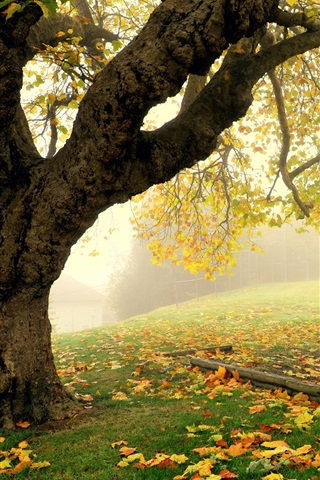 iPhone Wallpaper Autumn park scenery, tree, fog, leaves