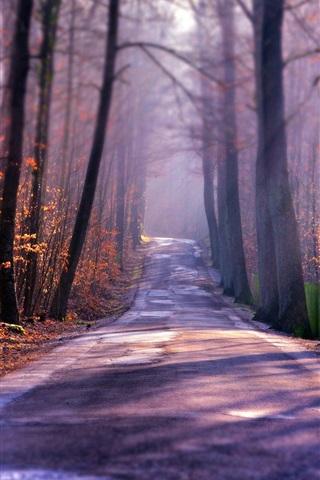 iPhone Wallpaper Autumn road, trees, fog, sun