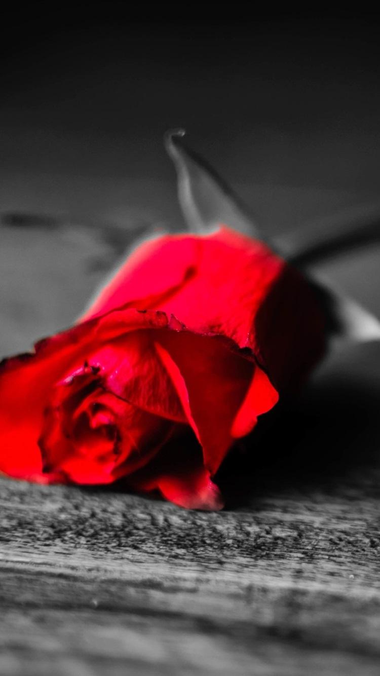 Fonds D 233 Cran Noir Et Blanc Seulement Rose Fleur Est