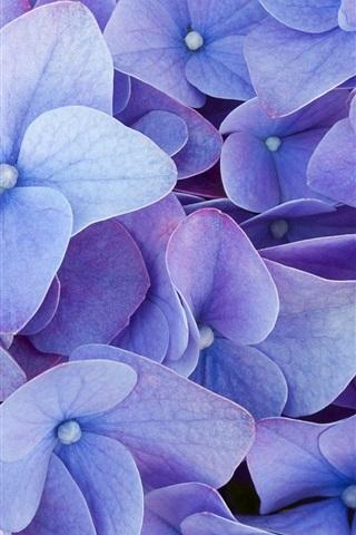 iPhone Wallpaper Blue four petals flowers