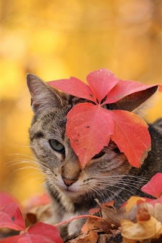 iPhone Wallpaper Cat, autumn, leaves