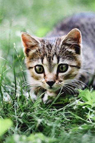 iPhone Wallpaper Cat, summer, grass