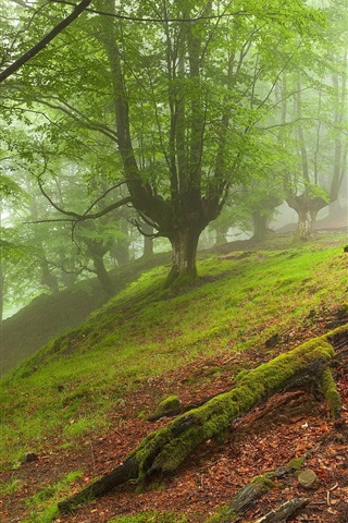 iPhone Wallpaper Forest landscape, trees, fog