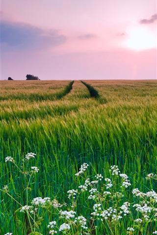 iPhone Wallpaper Nature scenery, grass, flowers, summer