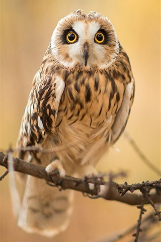 iPhone Wallpaper Owl in the forest