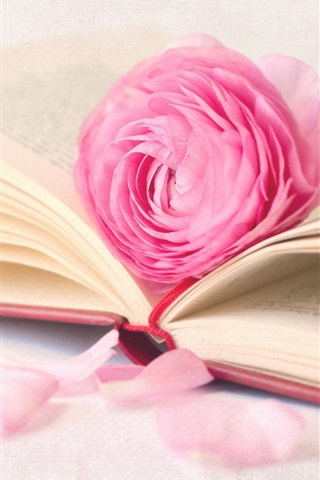 iPhone Wallpaper Pink rose flower with book