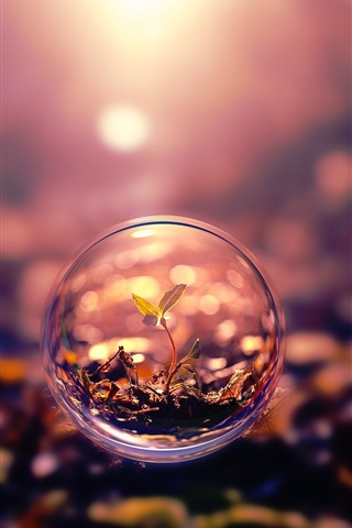 iPhone Wallpaper Creative pictures, bubbles, leaves, nature plants