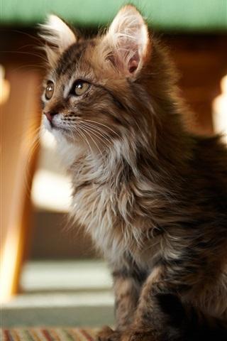 iPhone Wallpaper Cute cat in the room