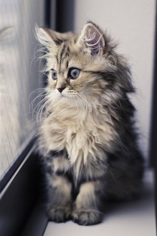iPhone Wallpaper Cute kitten, window sill, looking