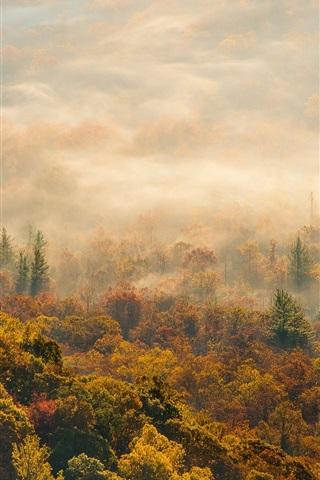 iPhone Wallpaper Morning, autumn forest fog