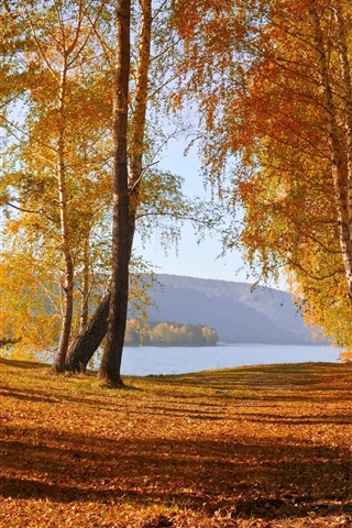 iPhone Wallpaper Nature autumn scenery, yellow leaves, trees, lake, mountains