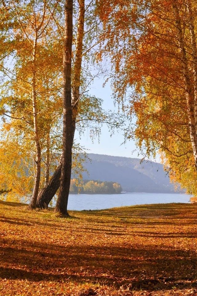 foto de Fonds d'écran Nature paysage d'automne, les feuilles jaunes ...