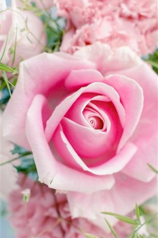 iPhone Wallpaper Pink rose, beautiful flowers