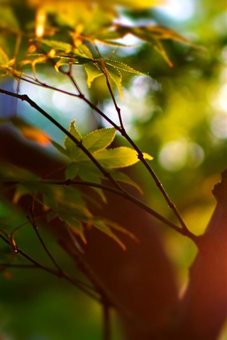 iPhone Wallpaper Summer, trees, bokeh, leaves, sunlight