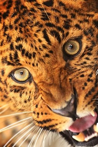 iPhone Wallpaper Animal of leopard, face, eyes, fangs
