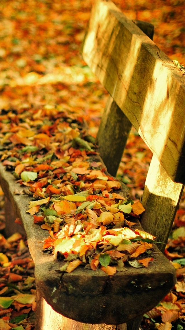 Autumn Nature Park Bench Table Fall Leaves 640x1136