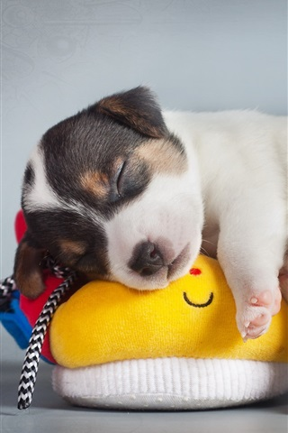 iPhone Wallpaper Cute puppy sleep on shoes