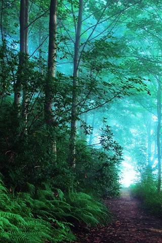 iPhone Wallpaper England, early morning forest, fog, blue