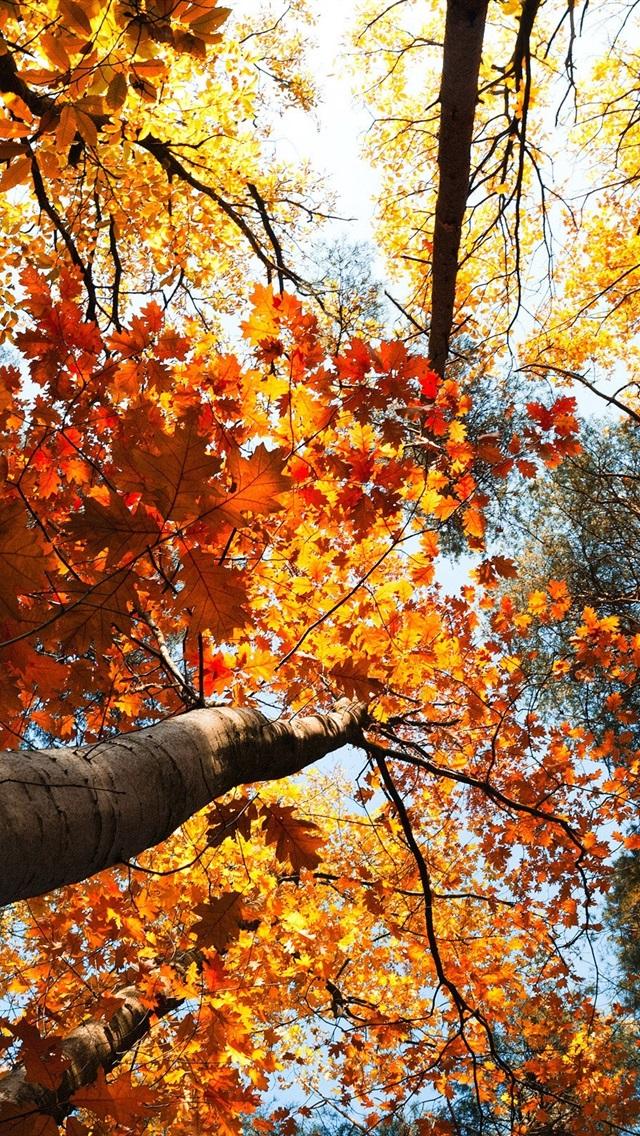 foto de Fonds d'écran La forêt en automne, les arbres, les feuilles jaunes ...