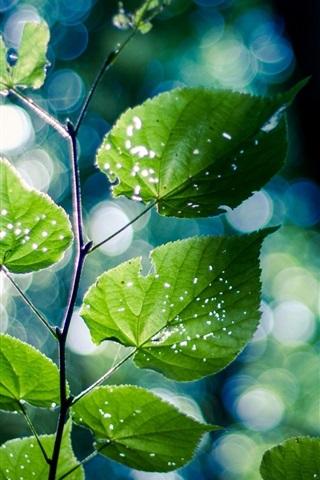 iPhone Wallpaper Green nature, branch, leaves, bokeh