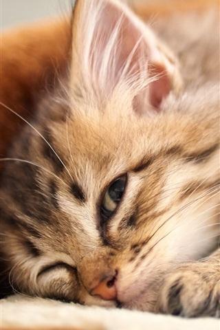 iPhone Wallpaper Kitten lying down to sleep