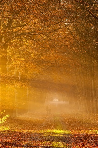 iPhone Wallpaper Nature autumn, road, trees, yellow leaves, fog, sunlight