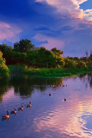 iPhone Wallpaper USA, Kansas, Wichita, Chisholm Creek Park, sunset, lake, trees, ducks