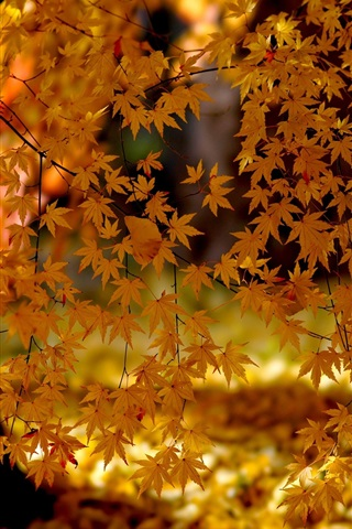 iPhone Wallpaper Yellow leaves, autumn, sunlight